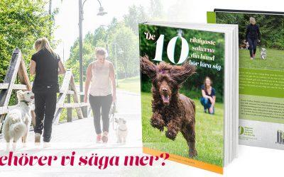 Månadens bok: De 10 viktigaste sakerna din hund bör lära sig