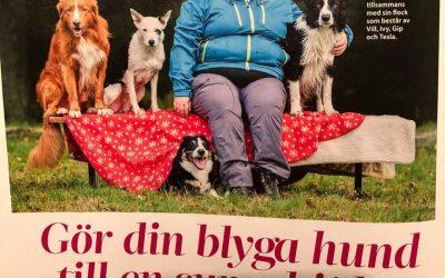 Nyhetssvepet: Blygerhundar