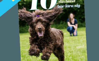 De 10 viktigaste sakerna din hund bör lära sig – ebok